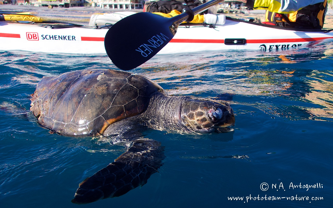 the route-antognelli-italie-kayak-tortue marine